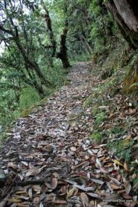 Trekking trail in Uttrakhand